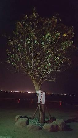 #市境之南樹 改名為 #108年日出之樹