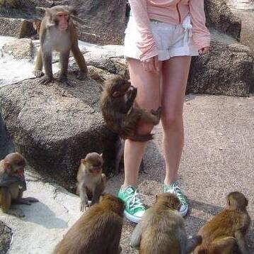 太瘦的壞處,吸引一些猴子猴孫