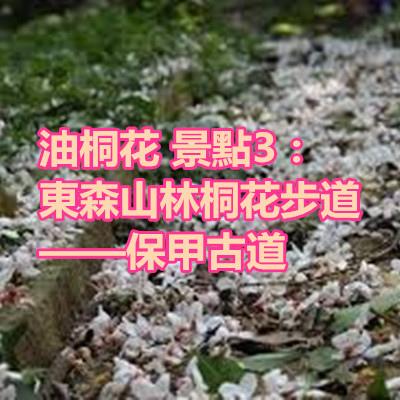 油桐花 景點3:東森山林桐花步道——保甲古道.jpg