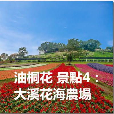 油桐花 景點4:大溪花海農場.jpg