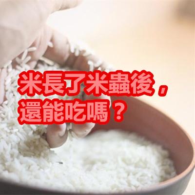 米長了米蟲後,還能吃嗎?.jpg