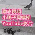 勵志視頻 小鴨子爬樓梯 YouTube影片.jpg
