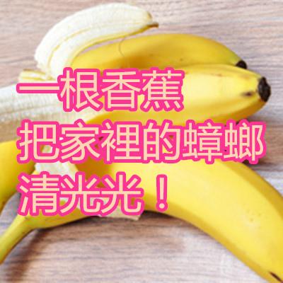 一根香蕉把家裡的蟑螂清光光!.jpg