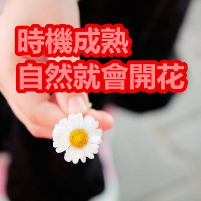 時機成熟自然就會開花.jpg