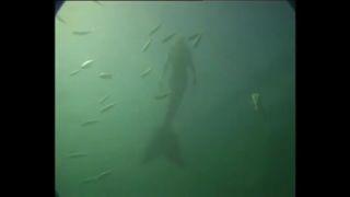 【相機拍到】5個鏡頭「美人魚可能真的存在」的證據!.jpeg