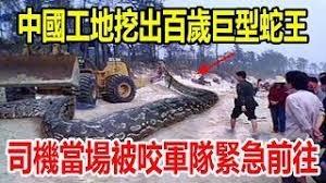中國工地挖出「140歲巨型蛇王」,司機當場被咬,軍隊緊急前往,震撼全場人!.jpg