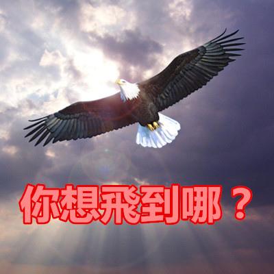你想飛到哪?.jpg
