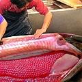 ♥ [影片分享] 世界上最貴的魚,出海捕撈一條,便可搖身一變成富豪!.jpg