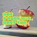 蘋果核 含 有益菌種 可以吃,蘋果種子 不能吃.jpg