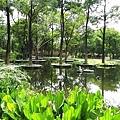大東濕地公園.JPG
