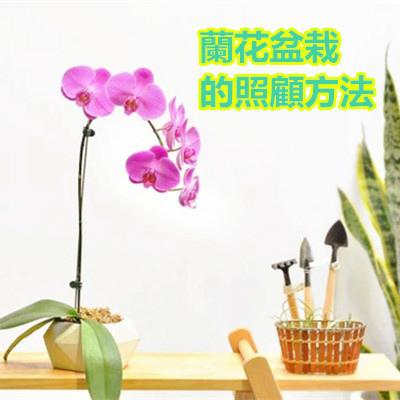 蘭花盆栽的照顧方法.jpg
