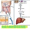 免疫力跟肝臟功能有關!.jpg