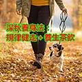 深秋養身法:規律健走+養生茶飲.jpg
