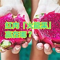 紅肉「火龍果」贏在哪?.jpg