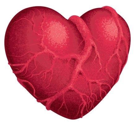 heart 1