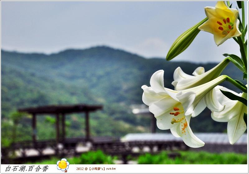 2012小司麥-白石湖 (14)