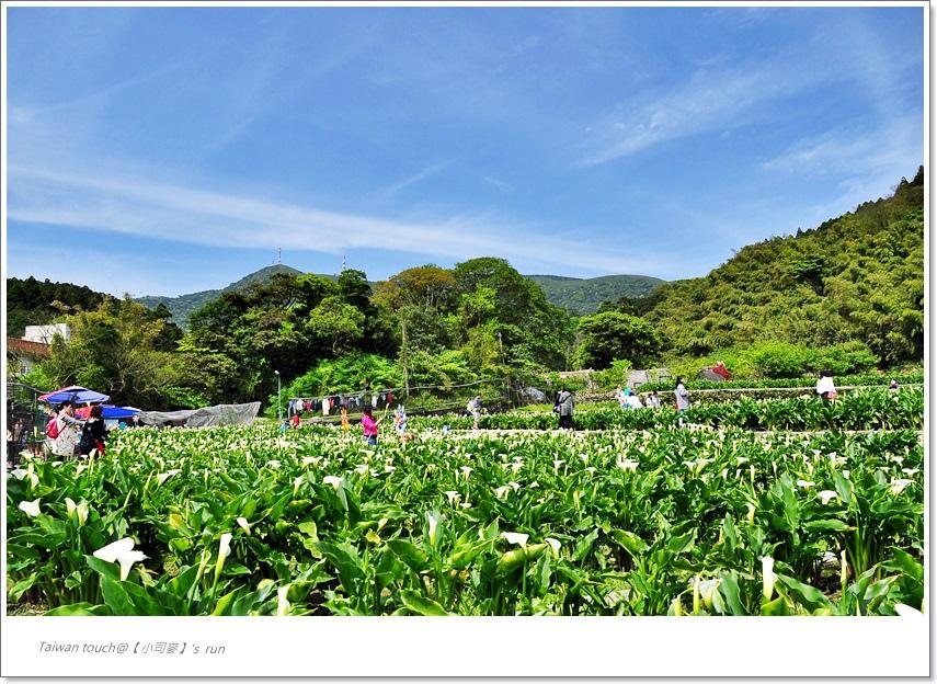 小司麥-竹子湖 (4)