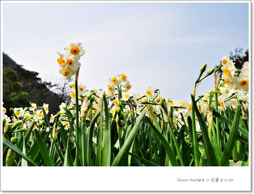 小司麥-陽明山花季  (24)
