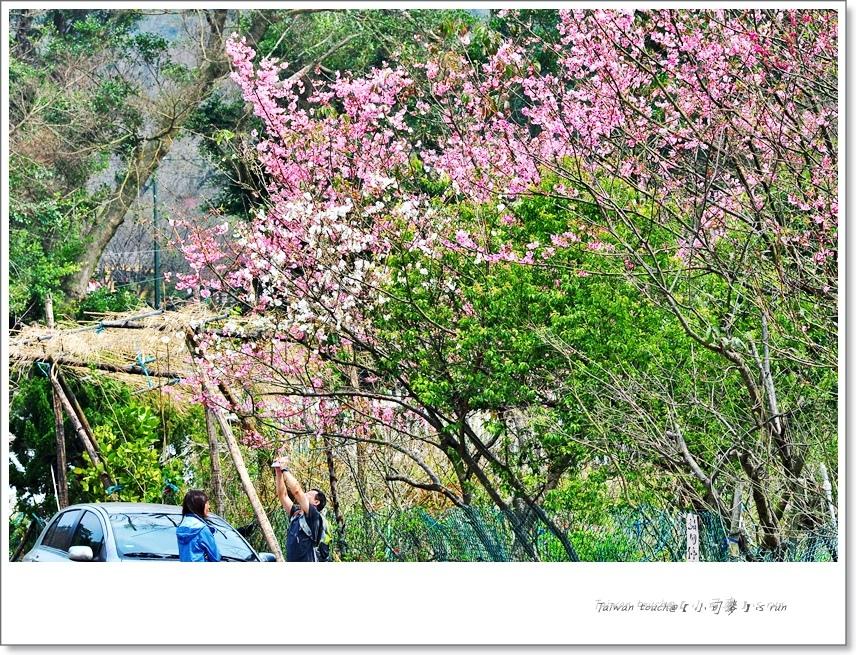 小司麥-陽明山花季  (13)