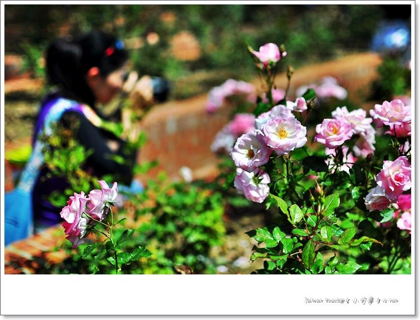 小司麥-蠟玫瑰 (15)