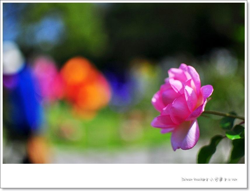 小司麥-蠟玫瑰 (34)