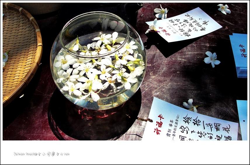 小司麥-土城桐花 (9)