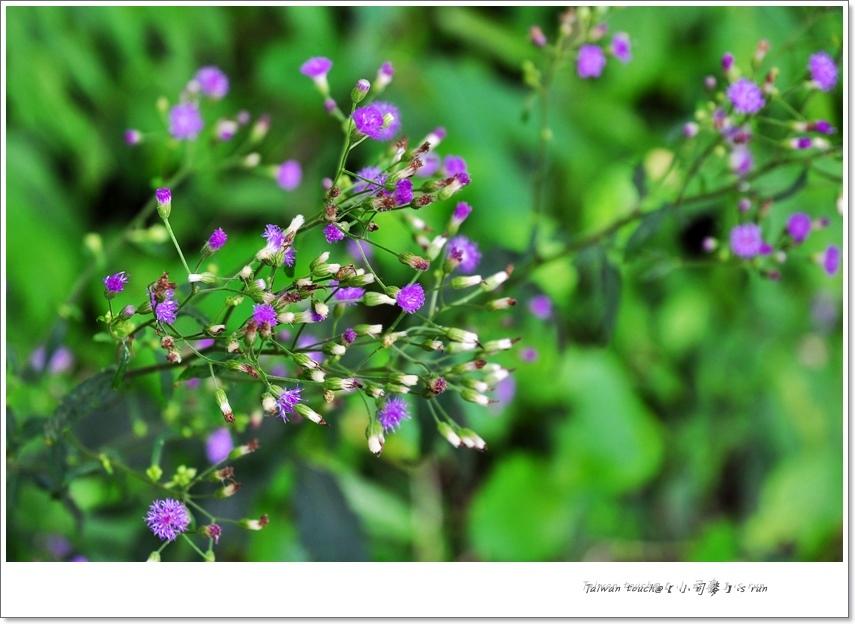 小司麥-林美盤石 (6)