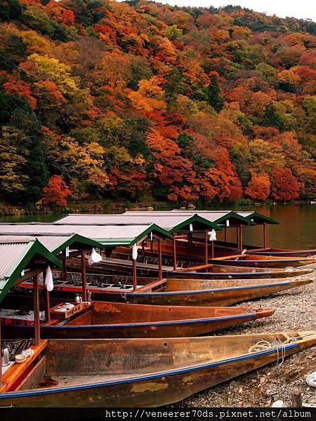 京都 嵐山 桂川(Katsura River in Arashiyama,Kyoto)11-24撮影