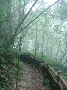 11 竹林小徑.jpg