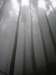 22 霧林3.jpg
