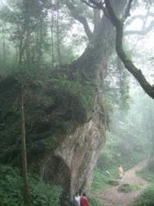 28 樹石盟1.jpg