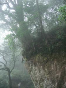 29 樹石盟2.jpg
