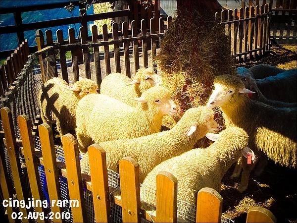 好可愛小羊羊!!