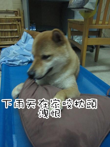 IMG_4922.JPG