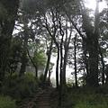 【台灣之美】觀霧-森林步道