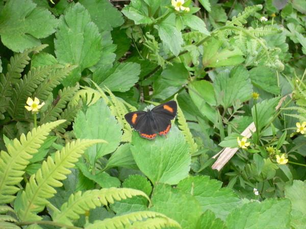 唯一拍到的一隻蝶