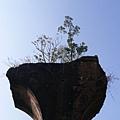 斷橋上的植物長得很挺拔