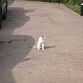 主人的貓-咪咪