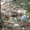 參加CVA一日行時汲水的溪流
