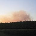遠處的bushfire