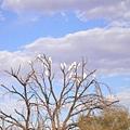 滿樹的鸚鵡