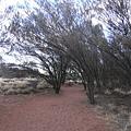 被風吹歪的樹林