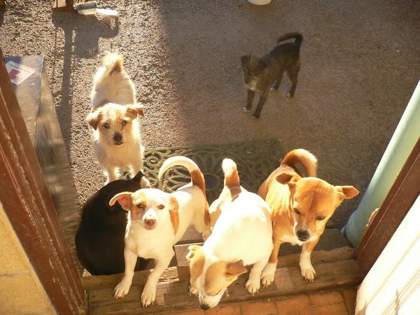 Kim家的六隻小狗狗