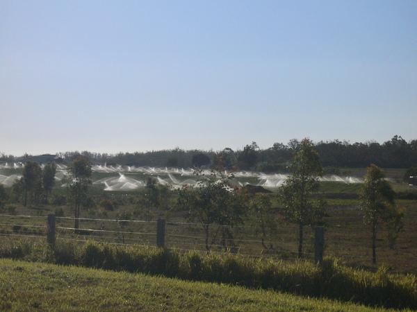 草莓園灑水時間
