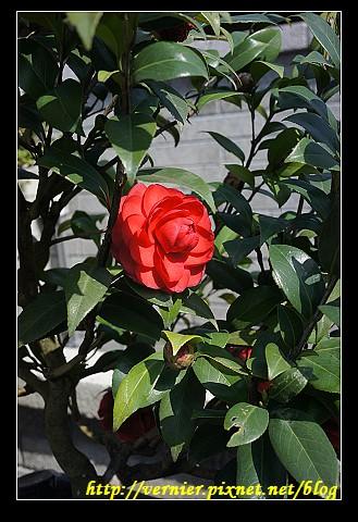 美麗的花2