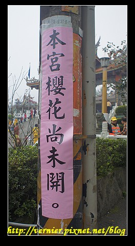 本宮櫻花尚未開