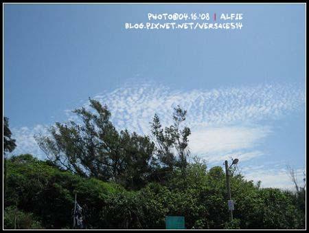 有樹有天有雲.jpg
