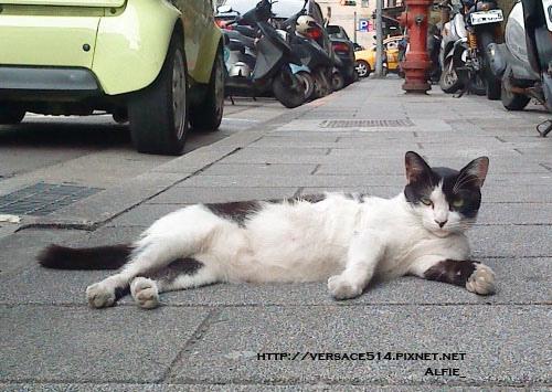 公司附近遇見的流氓貓.jpg