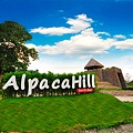 Alpaca Hill-0.jpg
