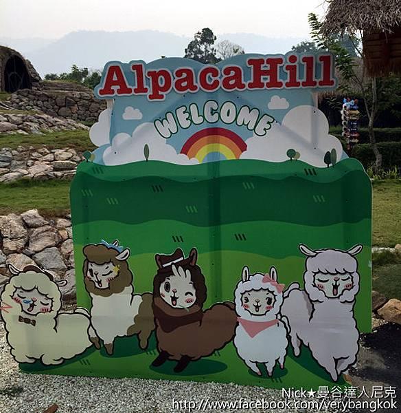 Alpaca Hill-1.jpg